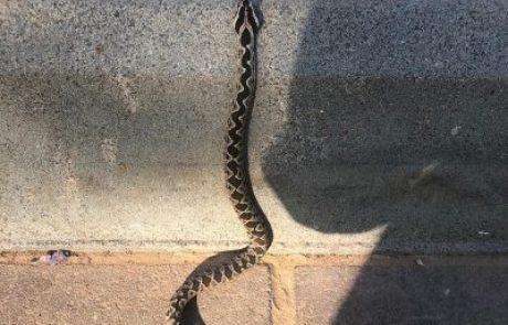 הקיץ מוציא את הנחשים מהמסתור